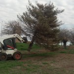 Using our tree shear to remove trees